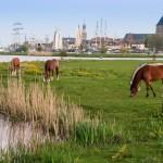IJssel River skyline Kampen